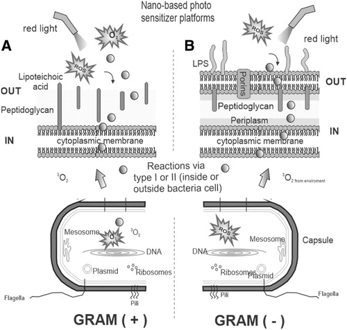 Prospects On Nano Based Platforms For Antimicrobial Photodynamic